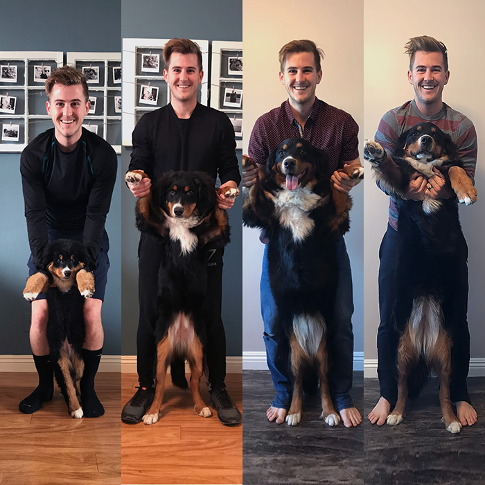 Dog Growing Up Comparison 3, 6, 9, 12 Months Later