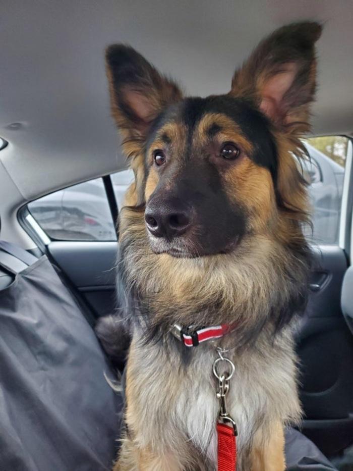 Dog Inside a Car Pet Adoption Photo