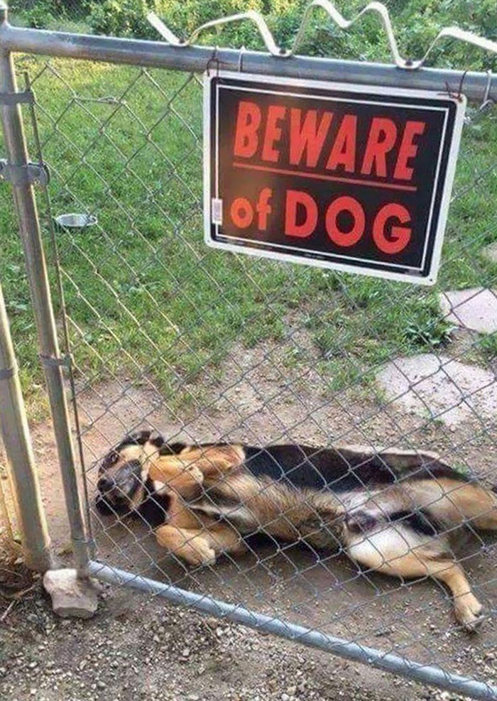 Dog Lying on Ground Behind Gate with Beware of the Dog Sign