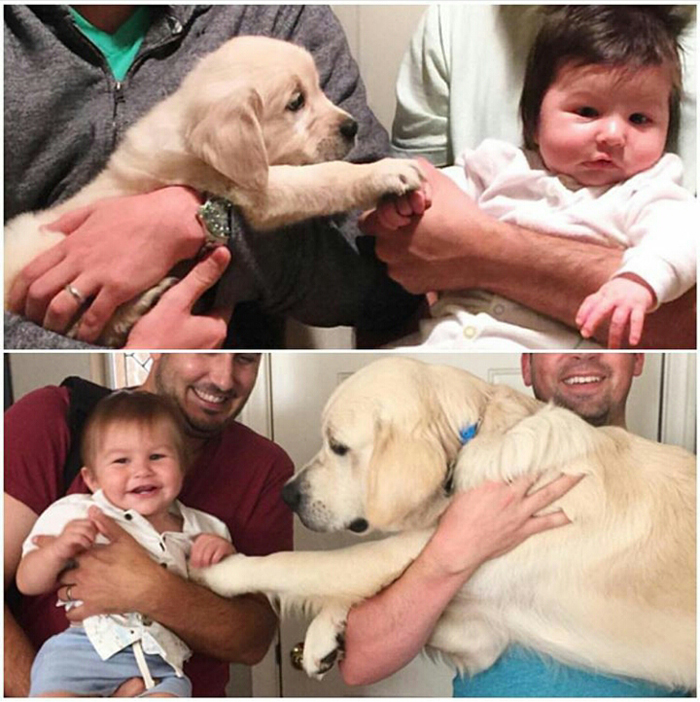 Pooch Putting His Paw on a Baby's Hand