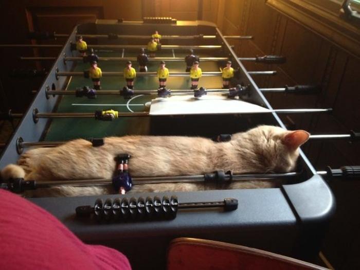 Feline Sleeping on a Foosball Table