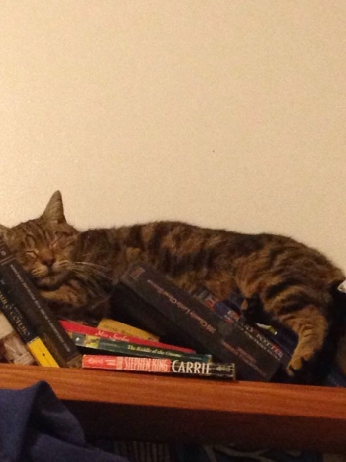 Feline Sleeping on a Pile of Books