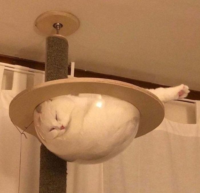 Feline Strange Sleeping Position