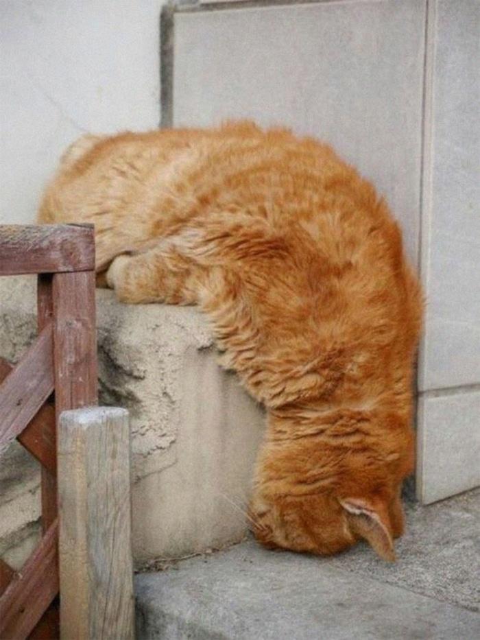 Feline Weird Sleeping Position