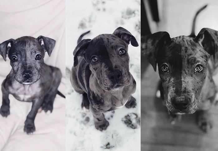 Gray Adopted Puppy