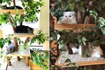 Indoor pet treehouses