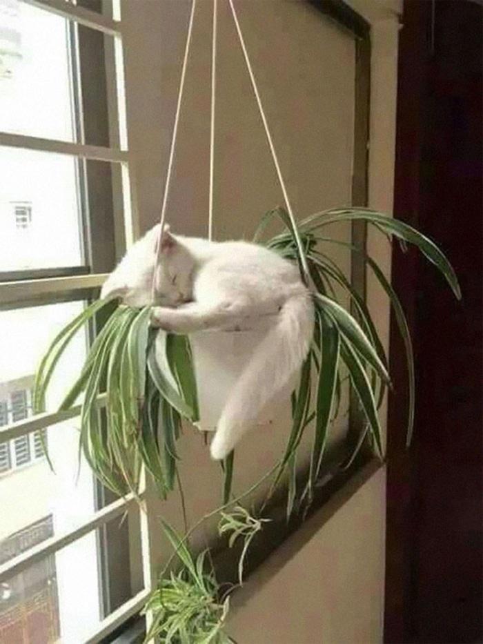 Kitten Sleeping Inside a Plant Pot
