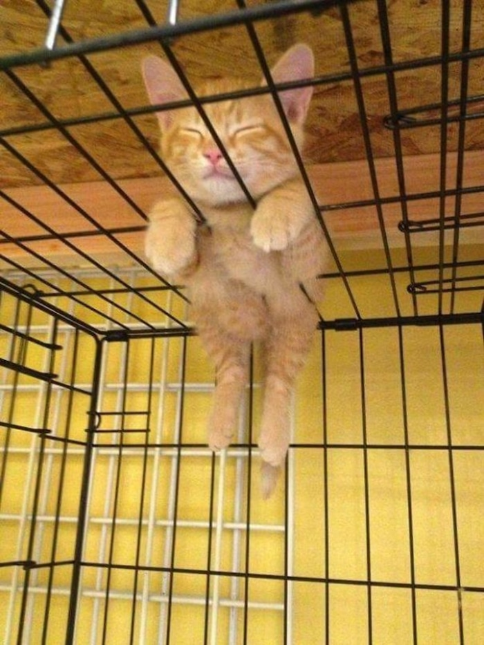 Kitten Sleeping On Top of a Cage