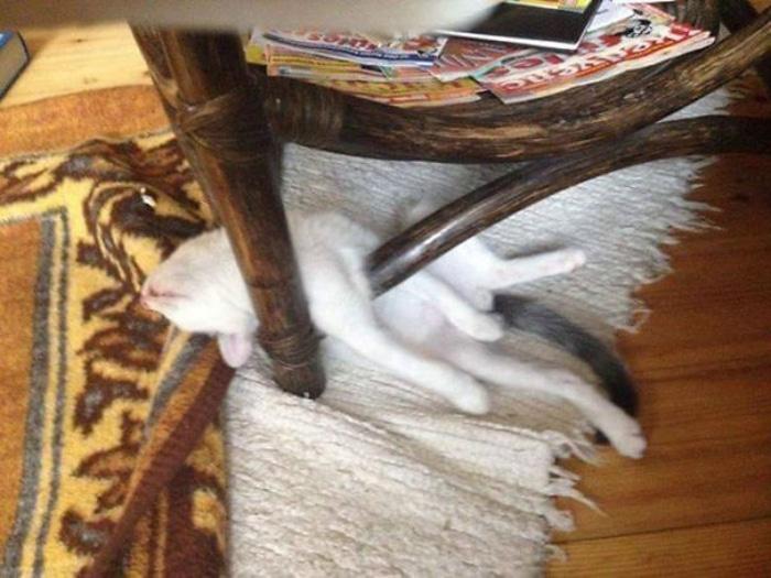Kitten Sleeping a Table's Legs