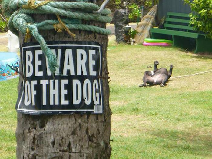 Pooch Warning Sign on a Tree