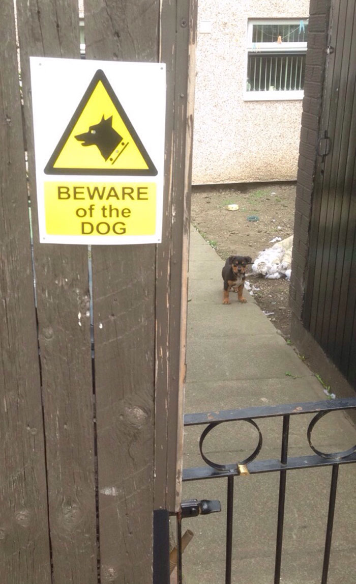 Puppy Behind Gate with Beware of the Dog Sign