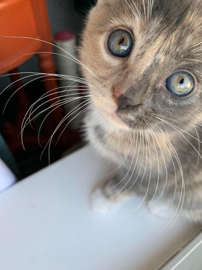 Rescue Cat with Different Face Fur Color Pet Adoption Photo