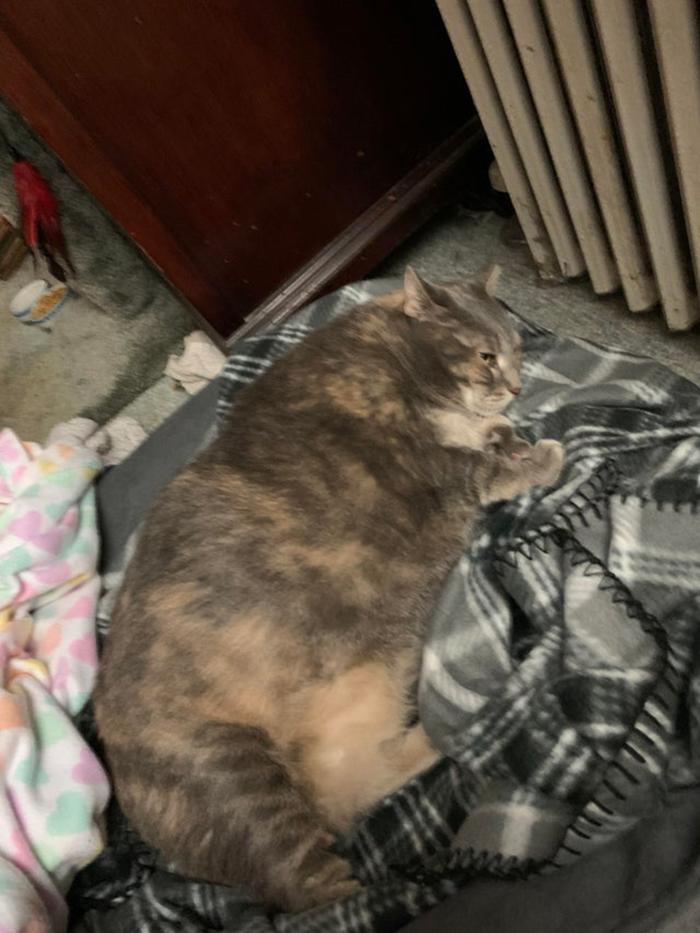 Shelter Cat Pet Adoption Photo
