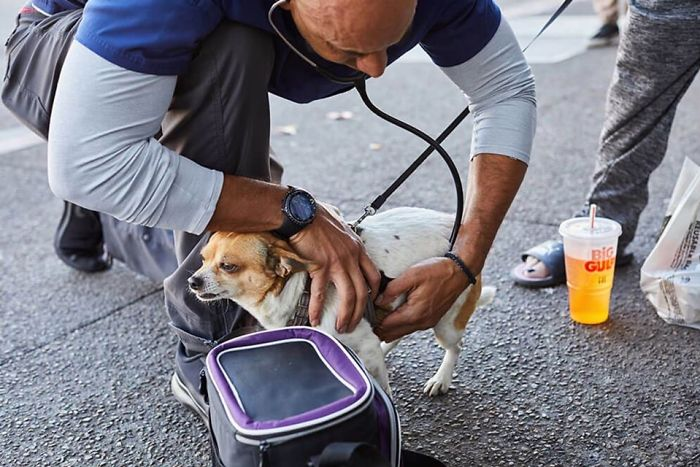 Street Veterinarian Dr. Kwane Stewart Checking the Heartbeat of a Dog