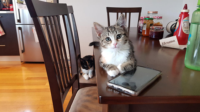 Two Cats on Dining Table