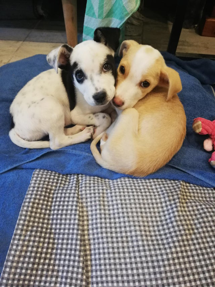 Two Rescue Puppies Lying Next to Each Other