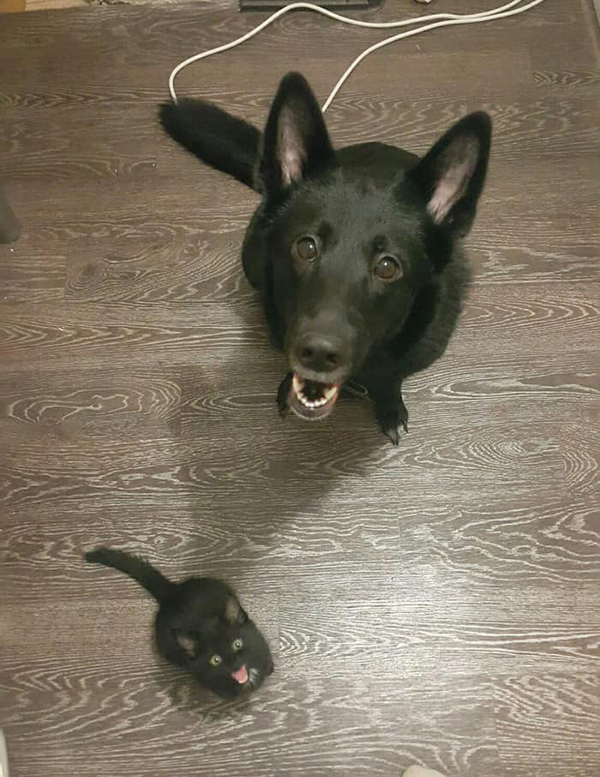 a black cat and black dog smiling up at the camera