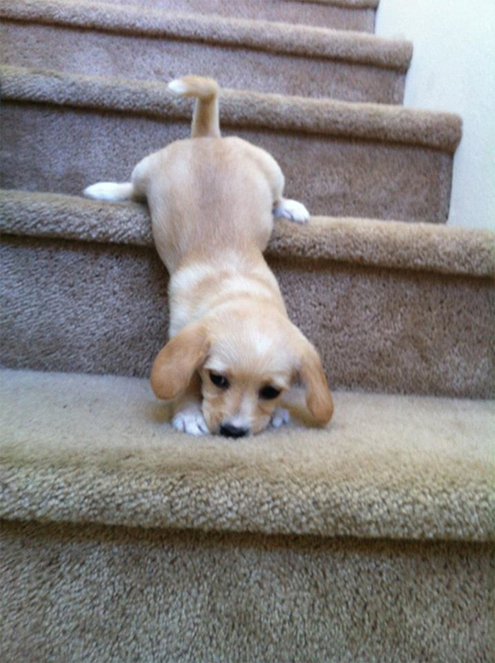 adorable puppies down the stairs
