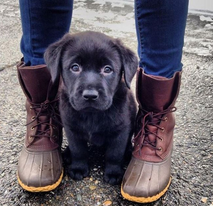 adorable puppies matching boots