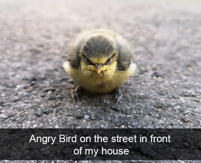 angry bird on the street