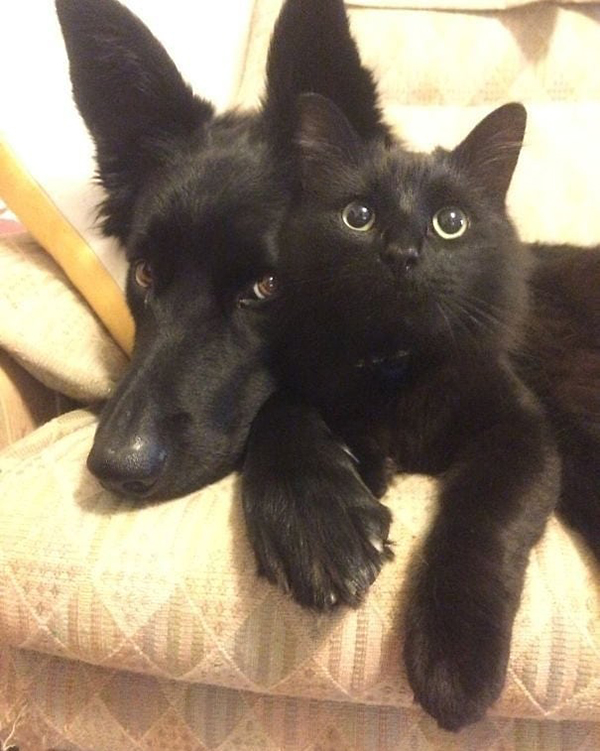 black cat and dog as buddies