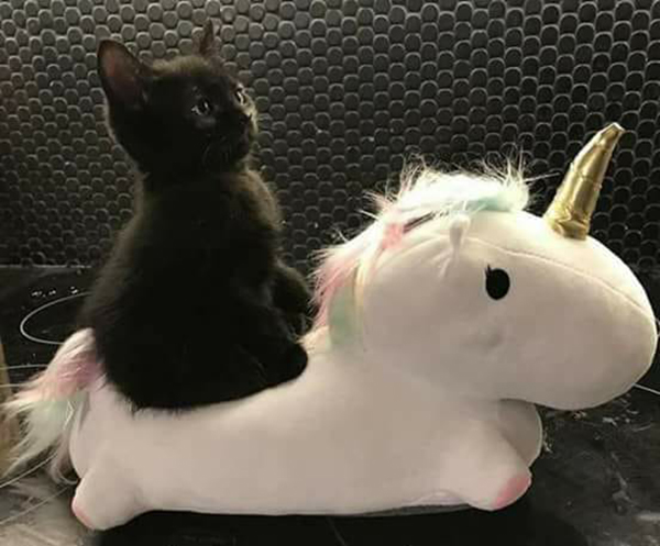black kitten rides a unicorn