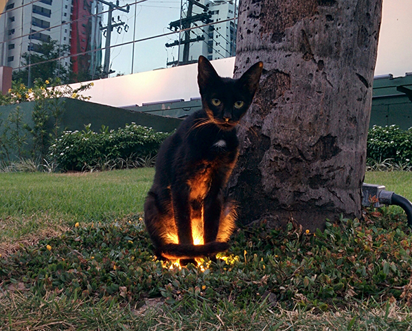 black kitty enjoys sitting on warm ground lighting