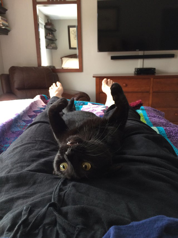black kitty lays on napping owner