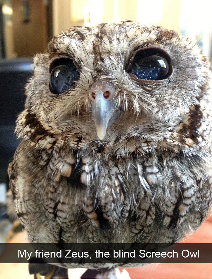 blind screech owl constellation eyes