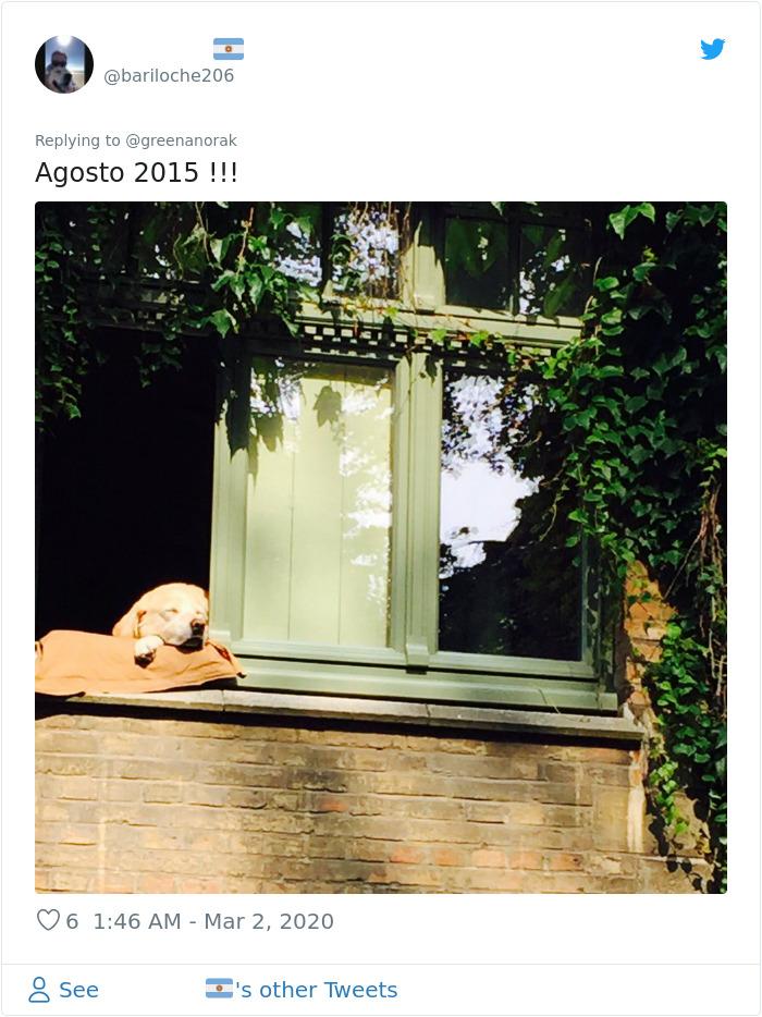 bruges famous dog last photo 2015