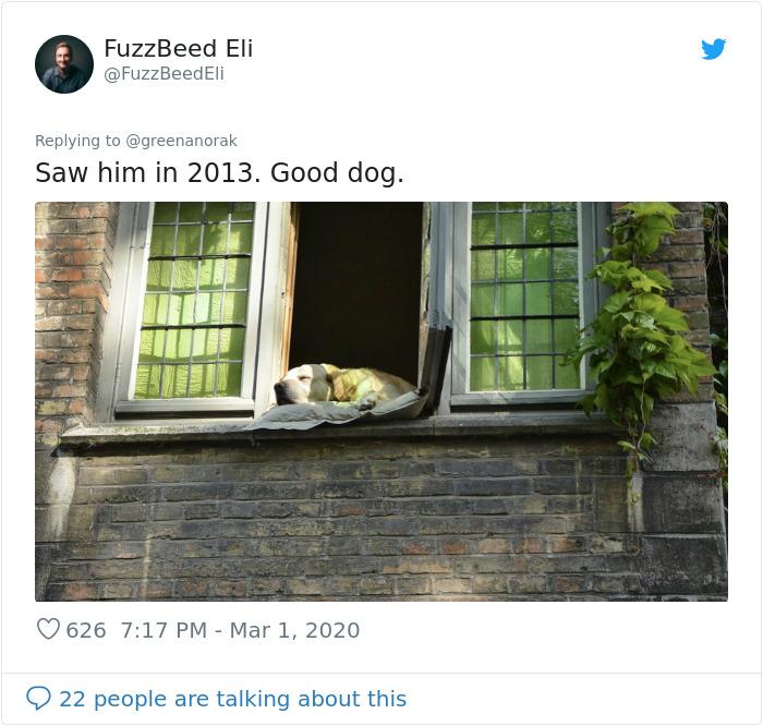 bruges famous dog photo 2013