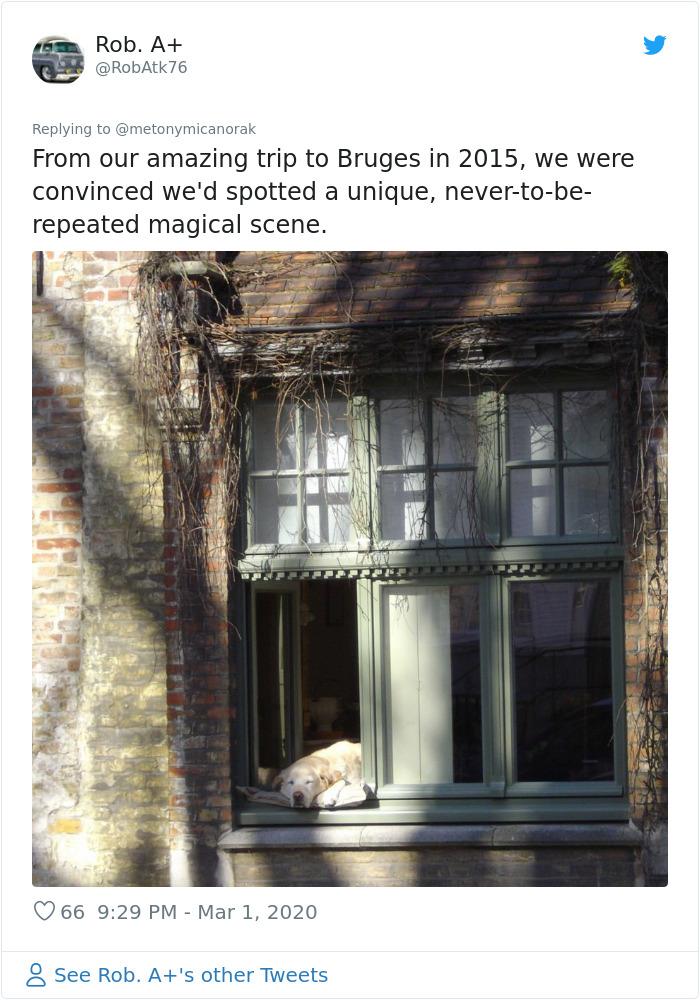 bruges famous dog photo 2015