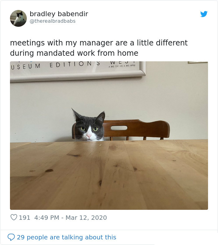 cat acting as a manager work from home