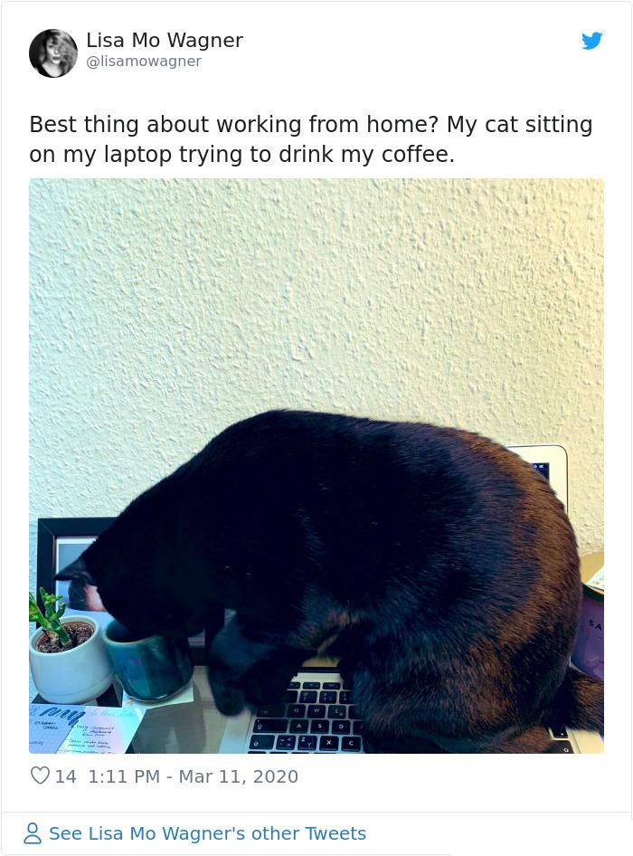cat coworker quarantine drinking coffee