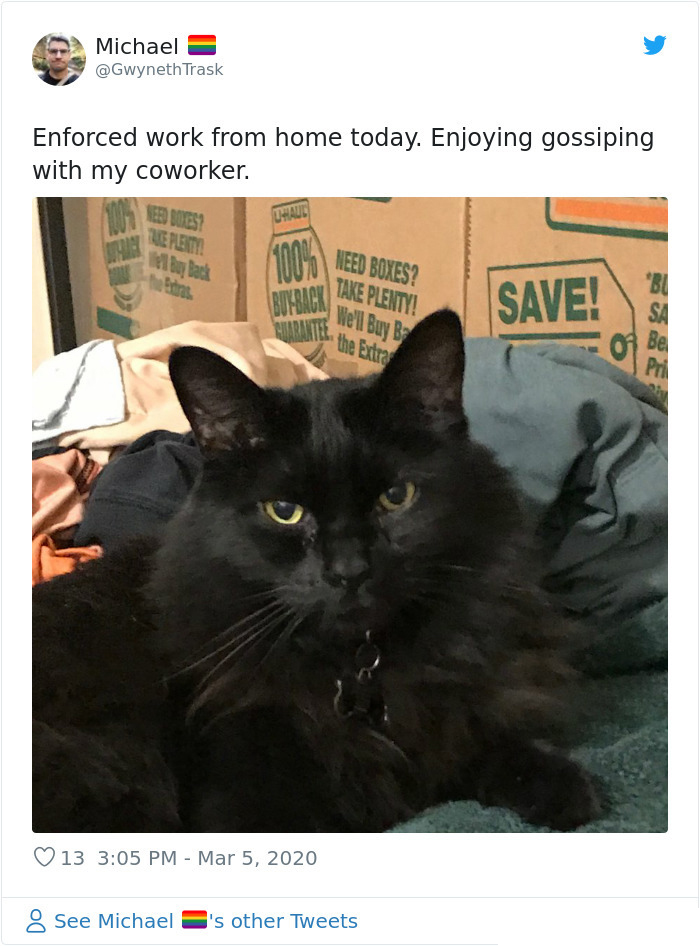 cat gossiping coworker