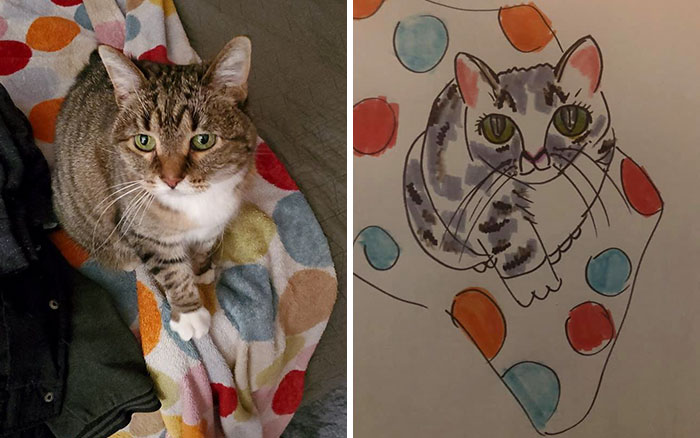 cat sitting on spotted towel