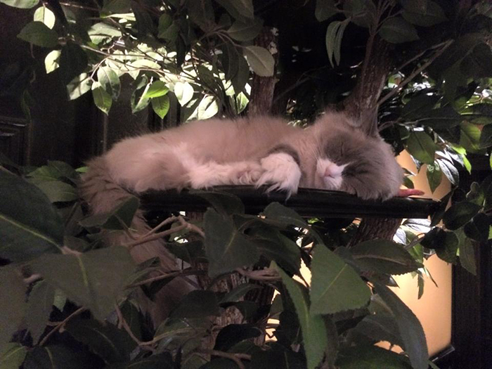 cat sleeping on tower made from real trees