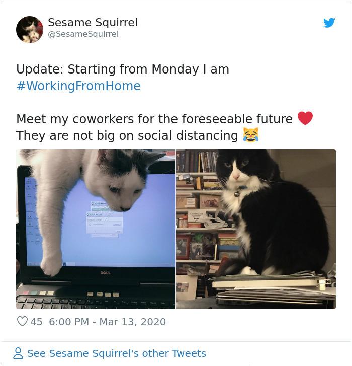 cats coworker quarantine