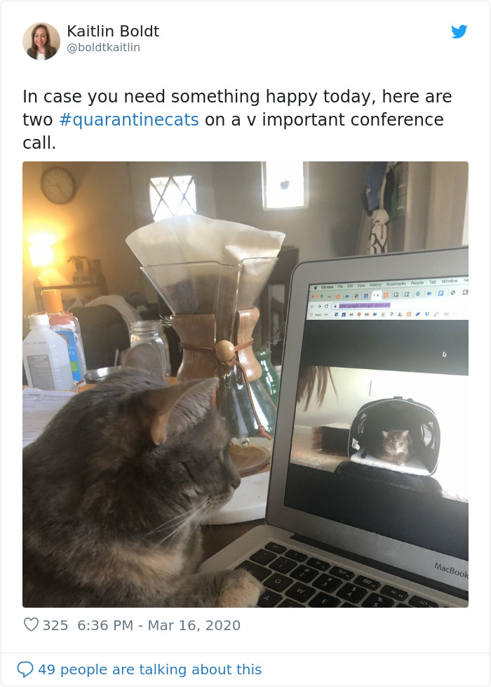 cats in quarantine conference call
