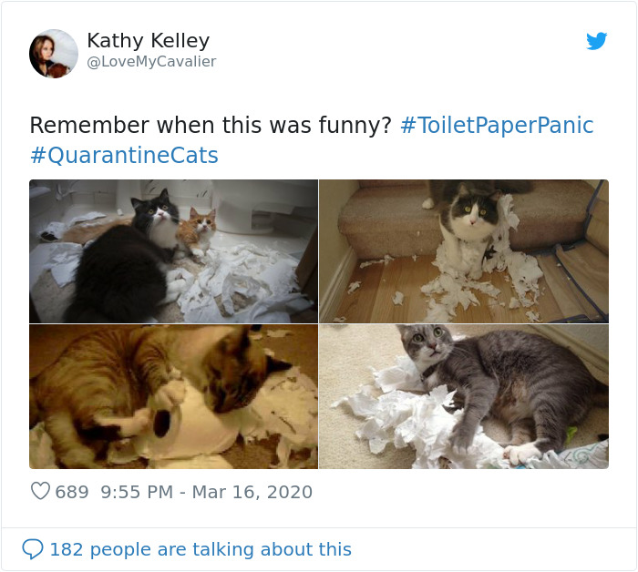 cats in quarantine toilet paper destroyers