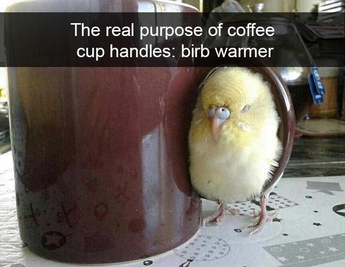 coffee cup handle birb warmer