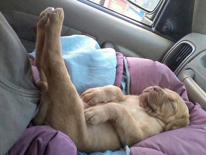 cute pup funny sleeping position