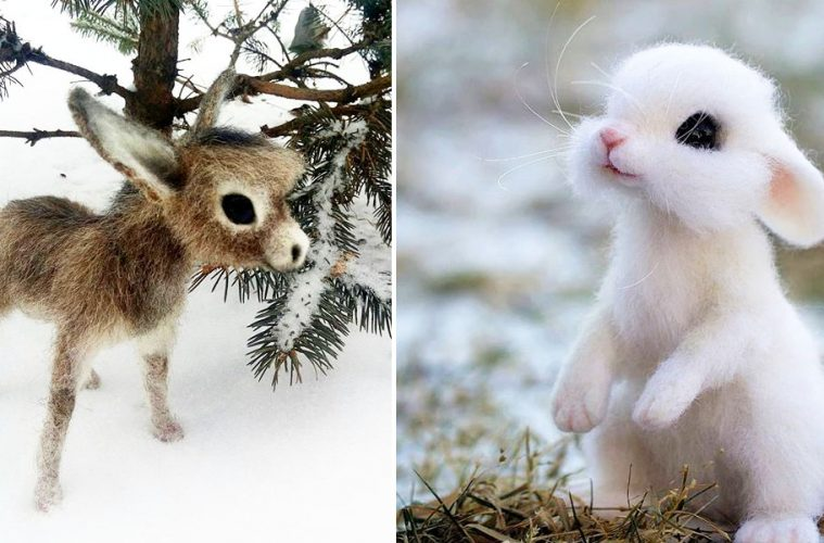 cute wool animals