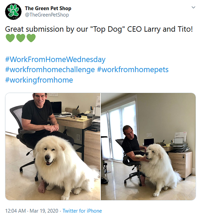 dog ceo work from home pets