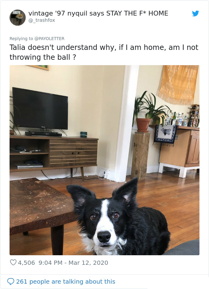 dog confused owner working from home