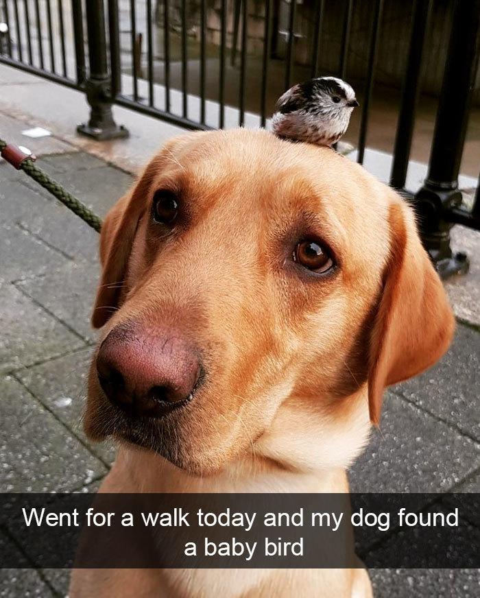 dog found a new friend