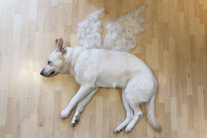 dog fur art wings