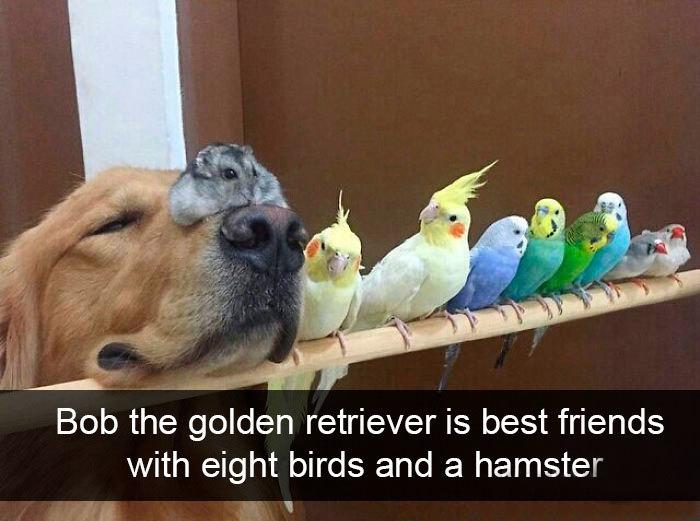 dog hamster eight birds friendship