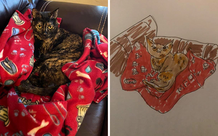 drawing of a pet cat resting on a red blanket
