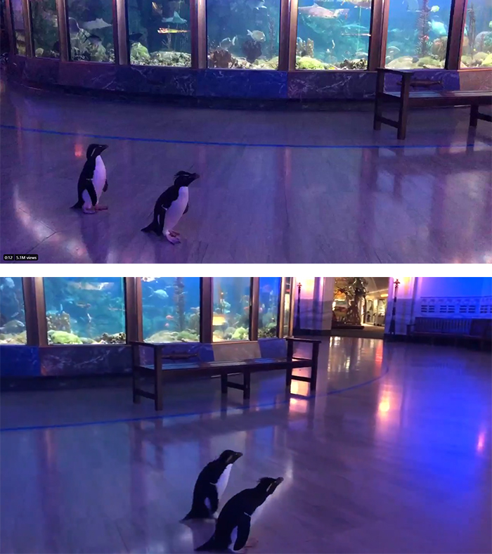 edward and annie the bonded penguins